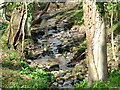 NY8262 : Stream in Robbs Dene by 27th Newcastle Scouts