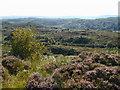 C1119 : On Doon Rock looking southeast by Chris Gunns