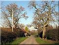 NZ1484 : Road through Molesden by Alan Fearon