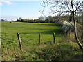 NZ3825 : Grazing land to the side of a private road and the A177 by Carol Rose