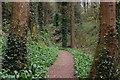 D3014 : A walk around Glenarm forest (7) by Albert Bridge