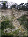 NZ4339 : Looking up to magnesian limestone cliffs by Carol Rose