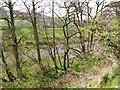 NT9131 : River Glen by Lisa Jarvis