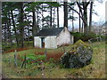 NM8365 : Building Amongst The Pines by Dave Fergusson
