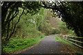 J4774 : Kiltonga nature reserve, Newtownards (8) by Albert Bridge