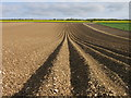 SE9167 : Yorkshire Wolds, Potato Ridges & Arable Fields by Andrew Barraclough