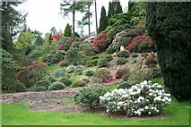 NS1385 : Benmore Botanic Garden, near Dunoon. by Elliott Simpson