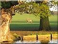 SP9633 : Woburn Deerpark, View over Horse Pond by Lauren Bryant