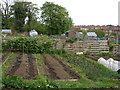 NZ4421 : Allotments adjacent to The A139 by Carol Rose