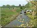 TM3389 : Cows drinking from a drainage ditch by Andrew Farrow