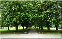 TA0729 : Avenue of Trees in West Park by Andy Beecroft