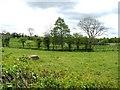 H4972 : Arvalee Townland by Kenneth  Allen