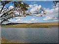 NU2505 : River Coquet by Pauline E