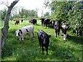 SU0891 : Bullocks, inside the moat by Roger Cornfoot