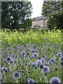 NS5461 : Gardens, Pollok House by wfmillar