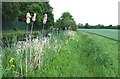 SO8785 : Footpath and Canal, near Stourton, Staffordshire by Roger  Kidd