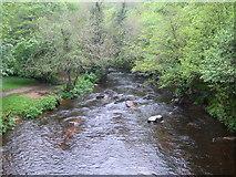 SX7489 : River Teign at Fingle Bridge by Nigel Cox