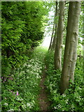 SE8569 : The Wolds Way on the edge of Settrington Wood by Phil Catterall