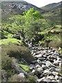 NM9264 : Burn in Glen Gour by Doug Lee