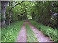 SU1013 : Tree lined track near Daggons by Maigheach-gheal