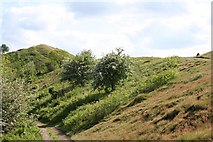 SO7641 : Black Hill from the North by Bob Embleton