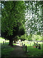 NY8548 : St Peter's churchyard by Mike Quinn