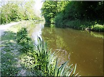 ST8160 : Kennet and Avon Canal looking east by Graham Horn
