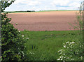 SO6025 : Young potato crop by Pauline E