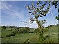 SY2893 : East Devon Way below Bulmoor by Derek Harper