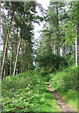 SO8386 : Forest Track, Enville Common, Staffordshire by Roger  Kidd
