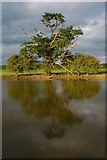 SO8843 : Trees and Croome River by Philip Halling