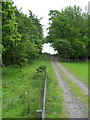 NY7362 : Path through plantation near Unthank Hall by Mike Quinn