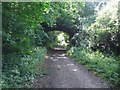 TG0823 : Disused Bridge over Marriott's Way at Start of New Plantation by Ian Robertson