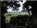 SX8257 : Lane into Ashprington by Derek Harper