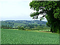 SO6695 : Rural Shropshire, near Morville by Roger  Kidd