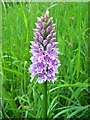 SU2634 : Common spotted orchid by Andrew Smith