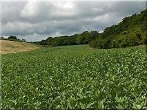 SU3942 : Farmland, Wherwell by Andrew Smith