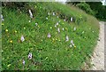 SU4059 : Common spotted orchids (dactylorhiza fuchsii) by Hugh Chevallier