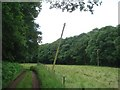 SO9172 : Leaning Telegraph Pole near Highwood Cottage by Trevor Rickard