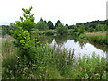 SJ8701 : Pool for Anglers, near Codsall, Staffordshire by Roger  Kidd