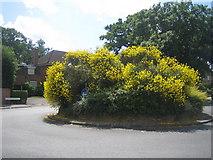TQ2688 : Hampstead Garden Suburb: Winnington Road, N2 by Nigel Cox