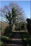 TG2105 : Marston Lane, Eaton by Katy Walters