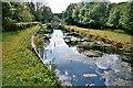 SJ2519 : Montgomery canal by alan fairweather