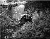 SU7151 : Eastern portal of Greywell Tunnel, Basingstoke Canal by Dr Neil Clifton