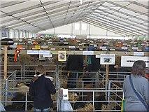 NT1473 : Sheep pens, Royal Highland Show by Richard Webb