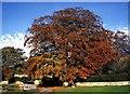 SE9429 : Brantingham Tree by Andy Beecroft