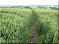 NZ2229 : Cut path through field of wheat by Oliver Dixon
