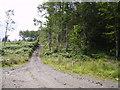 NY2422 : Track, Swinside by Michael Graham