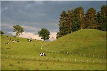 NY5636 : Farmland Little Salkeld by Helen Wilkinson