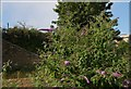 J3474 : Vacant site, Bridge End, Belfast by Albert Bridge